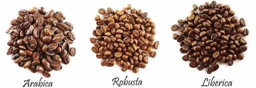 types de cafe en grains